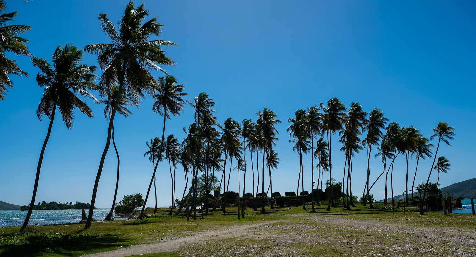 Palm trees on the way to Fort des Oliviers, Haiti