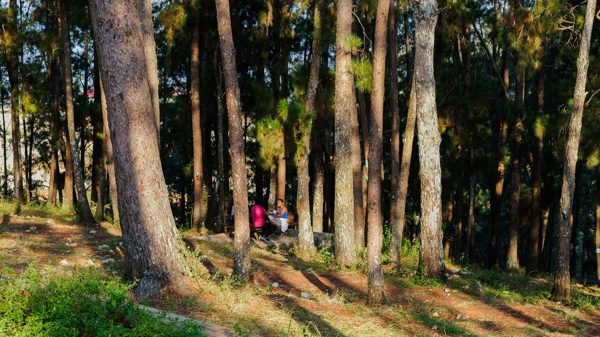 A group eats lunch at a picnic table under pine trees