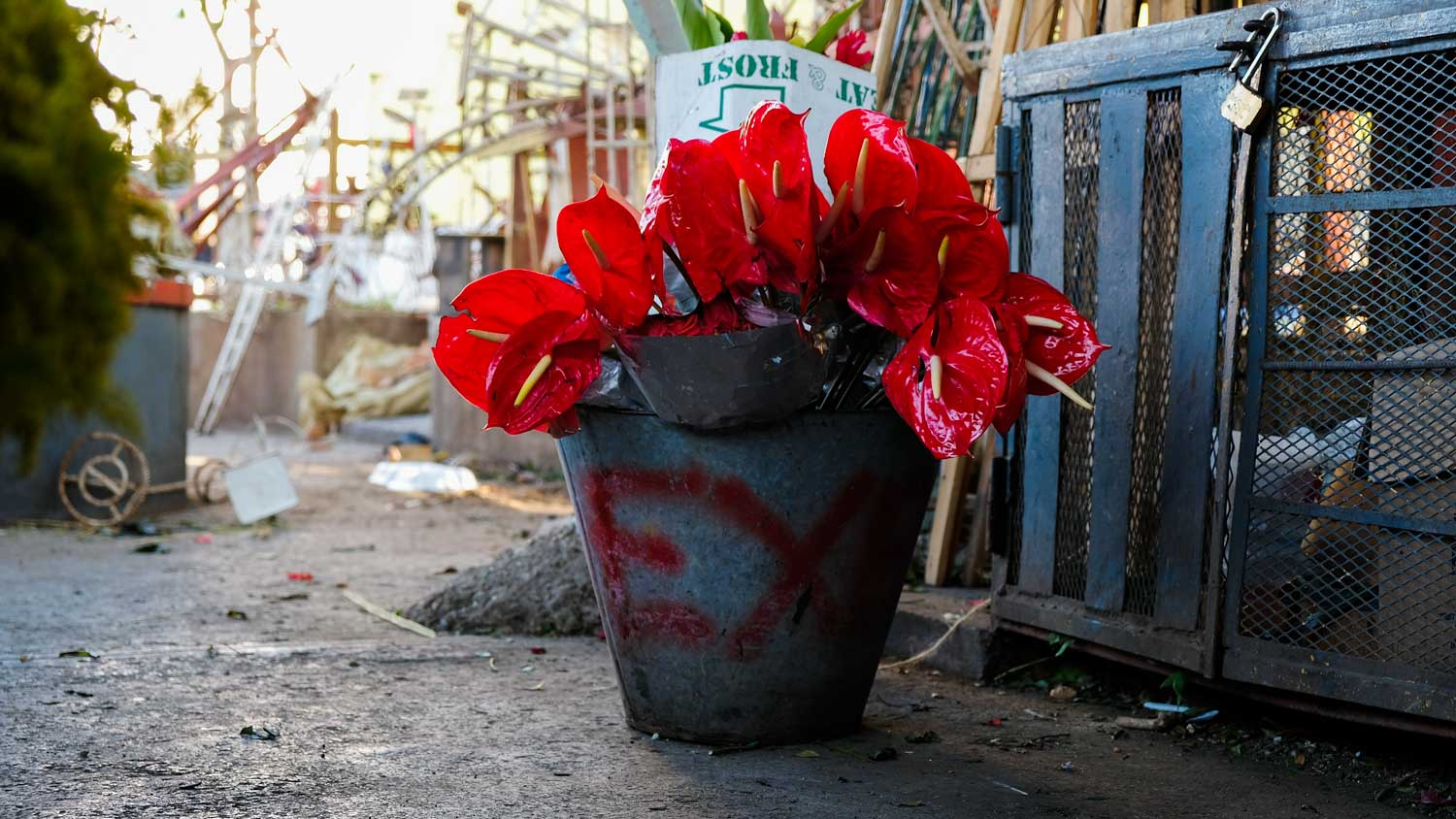 Anthurium flowers in a bucket at the flower market of Place Saint-Pierre