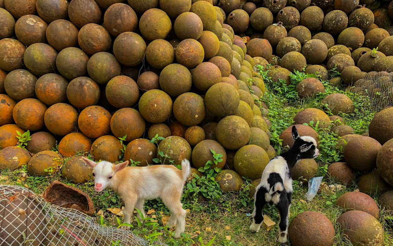 Two baby goats play among canon balls near Citadelle Laferriere, Haiti